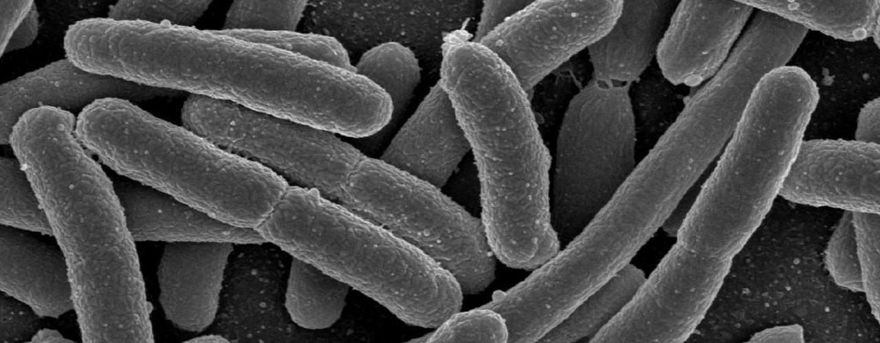 incidencia-microbiota-en-la-salud