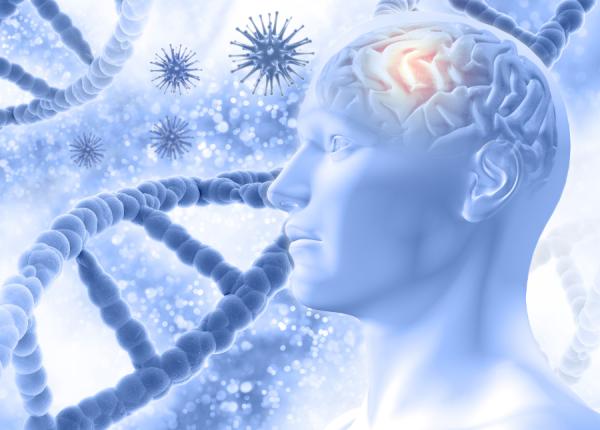 cerebro como regulador de la inflamación